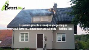 Likwidacja gniazda os znajdującego się pod dachówkami za pomocą gorącej mgły - Jedlina Zdrój