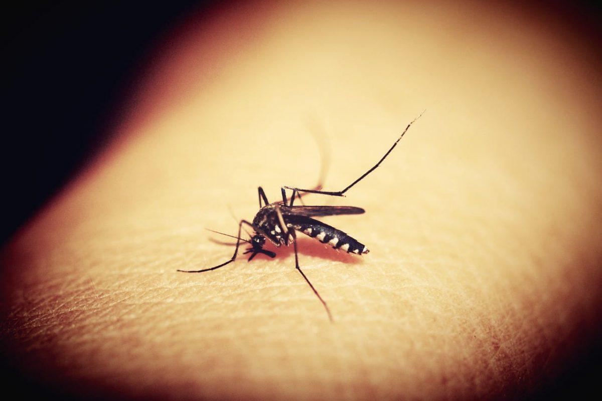 Skuteczna obrona przed kleszczami, komarami i muchami w sezonie letnim