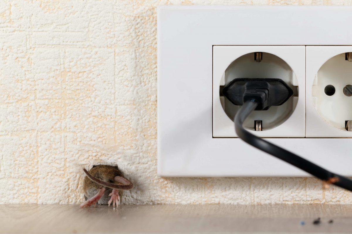 Mysz wchodzi do nory
